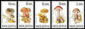 № - 153-157 - Mushrooms (I)