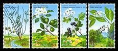 № - 501-504 - From The Red Book of the Republic of Moldova: Shrubs