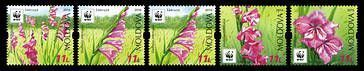 WWF - Protected Flora: Turkish Marsh Gladiolus (Gladiolus Imbricatus)