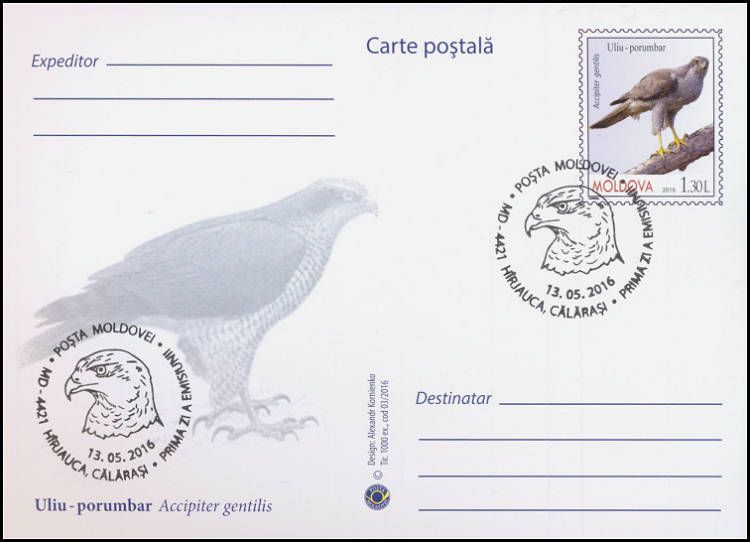 Postcard: Northern Goshawk (Accipiter Gentilis) (Address Side)