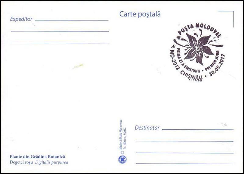 № 1005 MC1 - Foxglove (Digitalis purpurea)