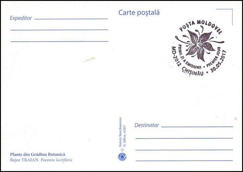 № 1007 MC1 - Chinese Peony (Paeonia lactiflora)