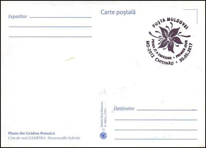 № 1008 MC1 - Daylily (Hemerocallis hybrida)