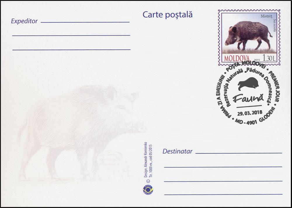 Wild Boar (Sus scrofa) (Address Side)