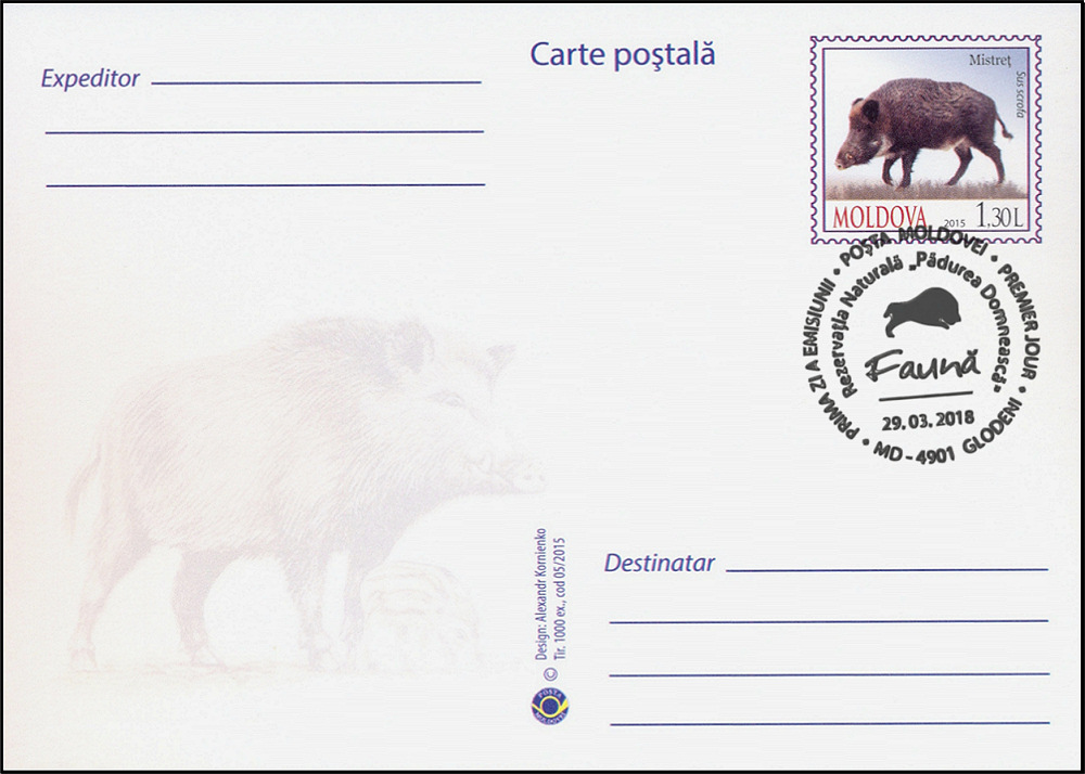№ 1039 MC1 - Wild Boar (Sus scrofa)