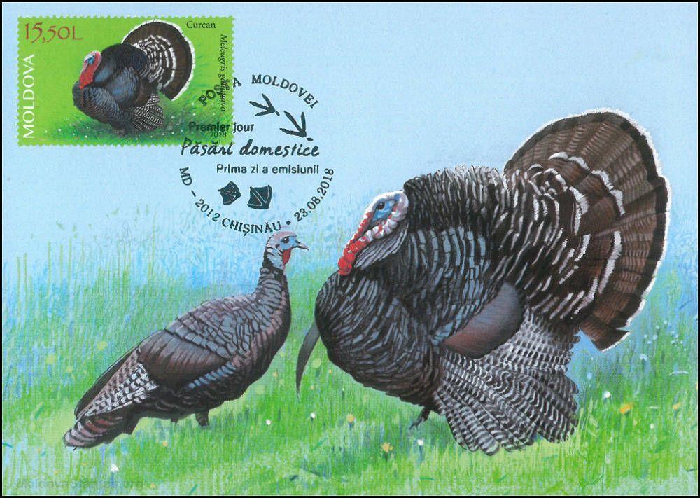 Domestic Turkey (Meleagris gallopavo)