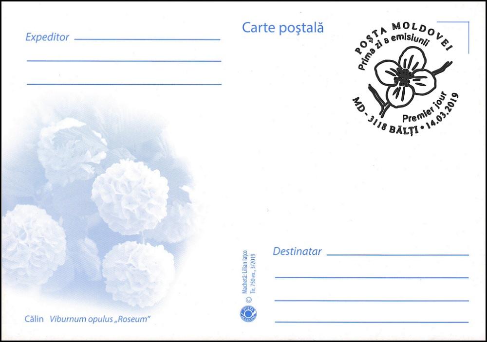 № 1088 MC1 - Guelder-rose or Snowball Tree (Viburnum opulus roseum)