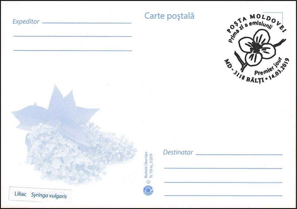 № 1089 MC1 - Lilac (Syringa vulgaris)