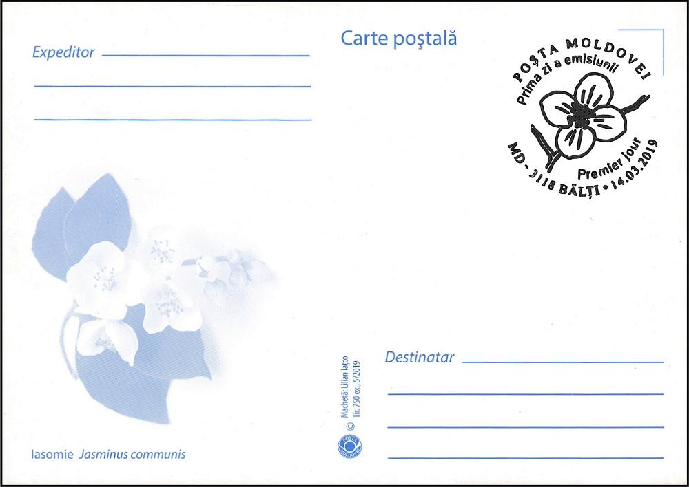 № 1091 MC1 - Jasmine (Jasminus communis)