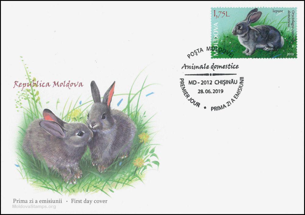 Cachet: Rabbits