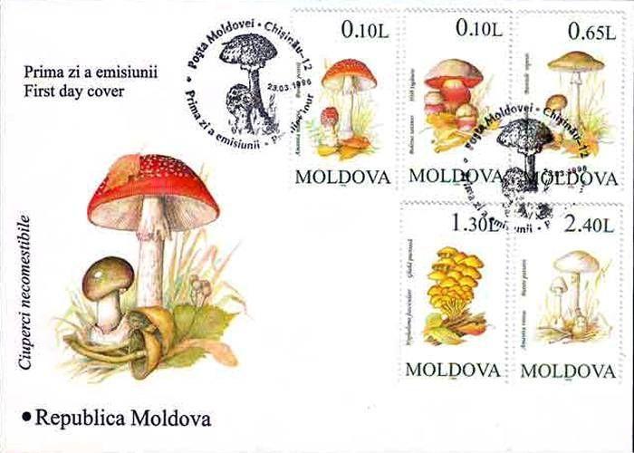 Cachet: Various Mushrooms