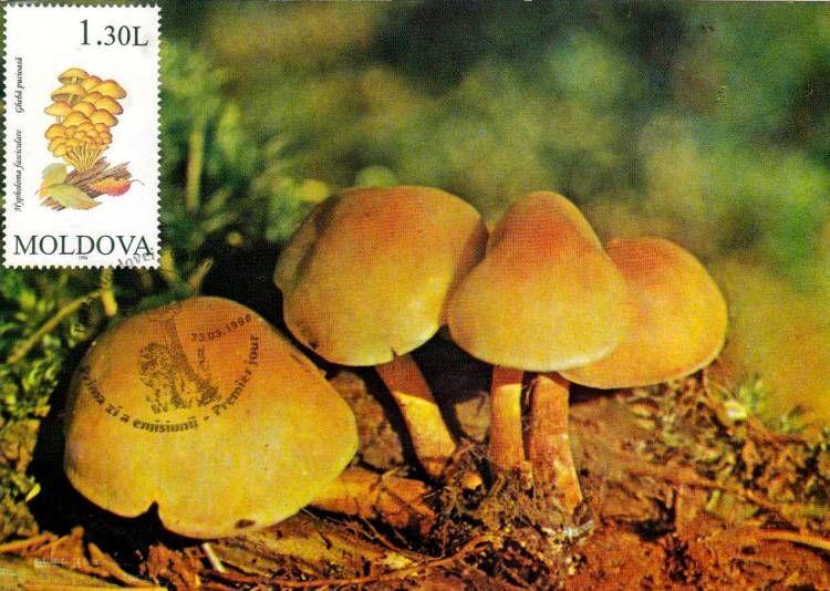 Sulphur Tuft