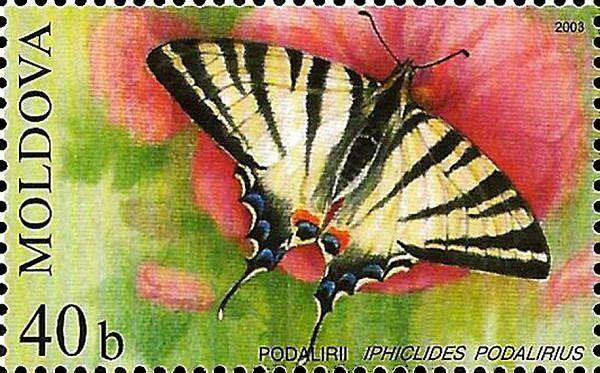 Scarce Swallowtail (Butterfly)