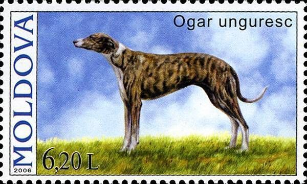 Magyar Agár (Hungarian Greyhound)