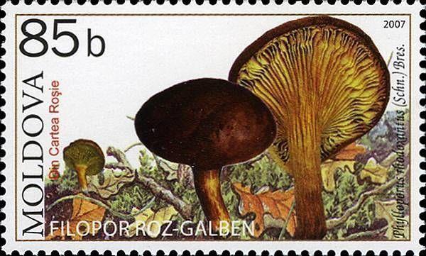 Gilled Bolete (Mushroom)