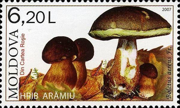 Porcino Nero (Mushroom)
