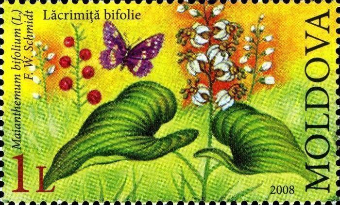 May Lily (Maianthemum Bifolium)