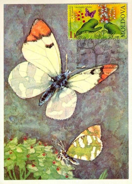 Bufferflies and Flora