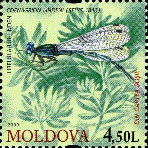 Goblet-Marked Damselfly