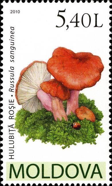 Bloody Brittlegill (Russula Sanguinea)