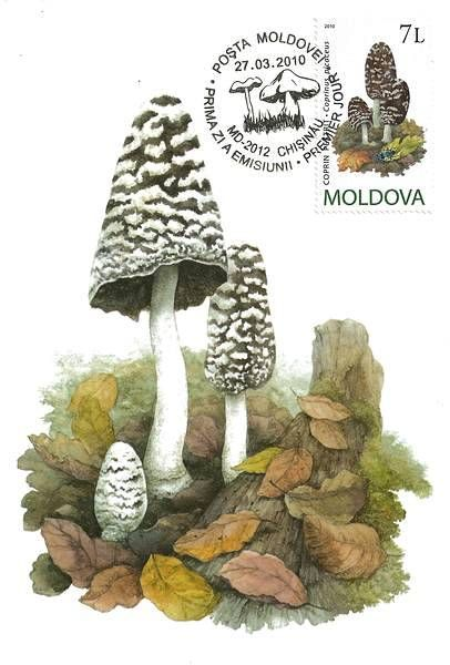 Magpie Fungus (Coprinus Picaceus)