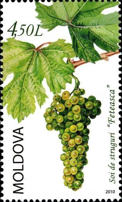 The «Feteasca» Grape Variety