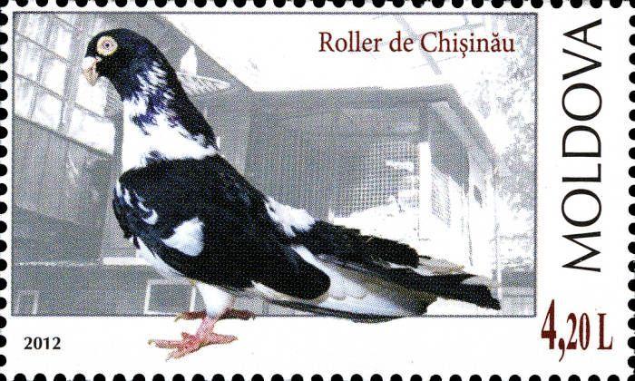 Chișinău Roller