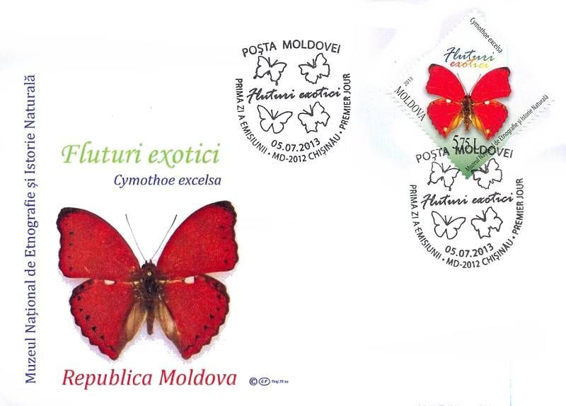 Cachet: Cymothoe Excelsa (Scalloped Red Glider Butterfly)