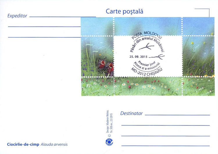 Eurasian Skylark (Address Side)