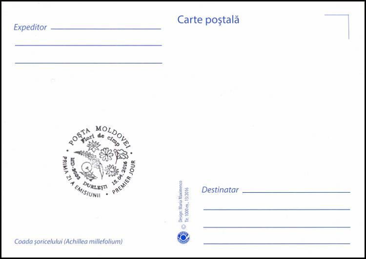 № 955 MC1 - Yarow (Achillea Millefolium)