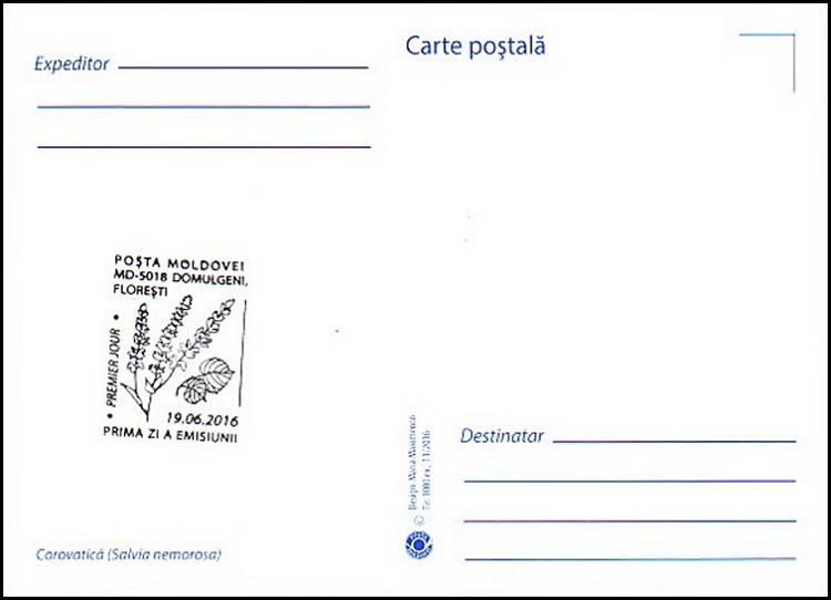 № 962 MC1 - Woodland Sage (Salvia Nemorosa)