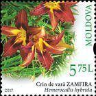 Daylily (Hemerocallis hybrida)