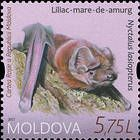 Greater noctule bat (Nyctalus lasiopterus)