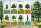 № 1033-1036 Kb - Trees 2018