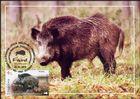 № 1039 MC1 - Fauna from the «Pădurea Domnească» (Princely Forest) Nature Reserve 2018
