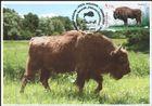 № 1040 MC1 - Fauna from the «Pădurea Domnească» (Princely Forest) Nature Reserve 2018