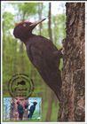 № 1041 MC1 - Fauna from the «Pădurea Domnească» (Princely Forest) Nature Reserve 2018