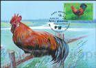 № 1059 MC1 - Cockrel (Rooster) (Gallus gallus domesticus)