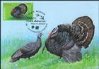 № 1060 MC1 - Domestic Turkey (Meleagris gallopavo)