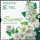 Jasmine (Jasminus communis)