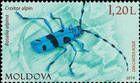 Alpine Longhorn Beetle (Rosalia alpina/Rosalia longicorn)