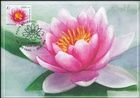 № 1099 MC1 - Pink Water Lily (Nymphaea Rose Arey)