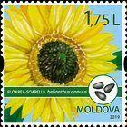 № 1113 (1.75 Lei) Sunflower (Helianthus annuus)