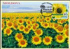 № 1113 MC1 - Sunflowers