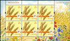 № 1114 Kb - Wheat (Triticum)