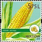 № 1115 (5.75 Lei) Maize (Zea mays)