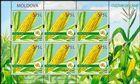 № 1115 Kb - Maize (Zea mays)