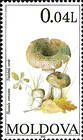 Green-cracking Russula