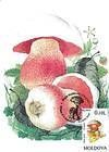 № 191 MC - Mushrooms (II) 1996