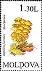 № 193 (1.30 Lei) Sulphur Tuft